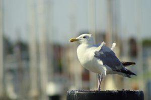 Erholung am Meer, Mildes Reizklima an der Ostsee