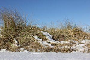 Düne mit Schnee bedeckt, auch im Winter gibt es zahlreiche Freizeitaktivitäten an der Ostsee
